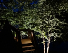 Tree and Step Lighting